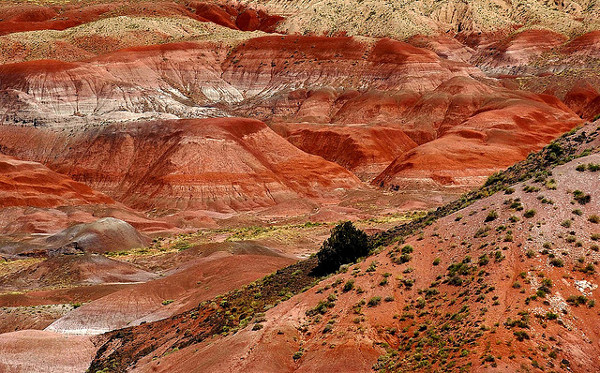 petrified forest national park - foresta pietrificata arizona